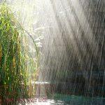 Lời dặn của mưa
