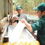 Cao su Bà Rịa: Bảo vệ môi trường, phát triển bền vững
