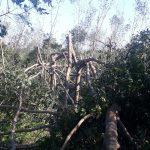 Cao su Quảng Ngãi: Thiệt hại nặng nề trên 430 ha cao su kinh doanh do bão số 9