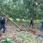 Đoàn Thanh niên các công ty cao su miền Trung khắc phục thiệt hại sau bão