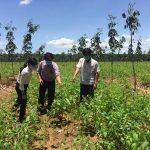 Cao su Tân Biên: 36% diện tích đất cao su sẽ chuyển đổi mục đích sử dụng