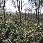 Tích cực hỗ trợ các công ty khắc phục thiệt hại sau bão số 9
