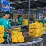Cơ hội cho cao su mở rộng thị trường