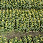 Biến đất hoang thành vườn hoa