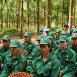 Cao su Đồng Nai – Kratie phấn đấu vượt kế hoạch sản lượng 6%