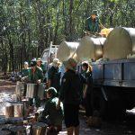 Cao su Bình Long: Dự kiến khai thác vượt 550 tấn