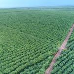 Ban hành Sổ tay hướng dẫn kết nối cộng đồng trong quản lý rừng cao su bền vững