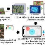 Công nghệ chẩn đoán bệnh rễ trắng trên cây cao su dựa trên phân tích hình ảnh bằng trí tuệ nhân tạo ...