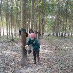 Các công ty cao su khu vực Campuchia: Tiếp tục bứt phá, đoàn kết hoàn thành nhiệm vụ