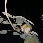 Rừng cao su: nơi sinh tồn của nhiều động thực vật