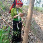 Cao su Sơn La thi ảnh lao động nữ với trang phục truyền thống