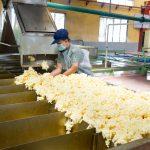19 công việc nặng nhọc, độc hại, nguy hiểm trong ngành cao su