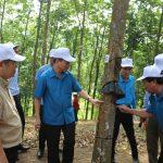 Xây dựng Cao su Điện Biên trở thành điểm sáng ở khu vực Tây Bắc
