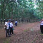 Nâng cao năng suất, chất lượng vườn cây khu vực Tây Nguyên