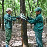 Công đoàn Cao su Bình Thuận: Nhiều hoạt động ý nghĩa