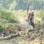 Cơ hội gia tăng giá trị xuất khẩu bền vững cho gỗ cao su