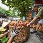 Tìm giải pháp tiêu thụ nông sản đến mùa thu hoạch