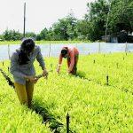 Gắn phát triển kinh tế rừng với bảo vệ môi trường