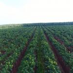Tập đoàn Công nghiệp Cao su Việt Nam (VRG): Vị thế mới, tầm vóc mới