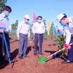 Cao su Phú Riềng trồng 15.600 cây xanh