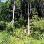 Trồng rừng FSC hiệu quả kinh tế gấp 1,5 lần