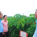 Cao su Chư Prông đảm bảo cây giống chất lượng cho vụ trồng mới