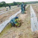Cao su Tây Ninh: Hoàn thành tái canh sớm nhất