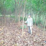 Giữ màu xanh cho rừng: Khởi sắc kinh tế lâm nghiệp