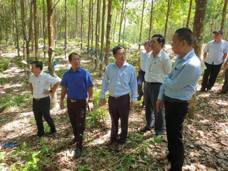 Tham quan vườn cây khai thác tại NT Nông Sơn