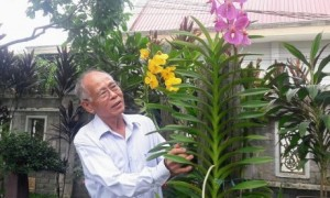 Ông Lê Văn Khoa chăm sóc cây kiểng tại vườn nhà.