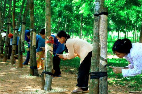 Đào tạo nghề cho người dân nông thôn