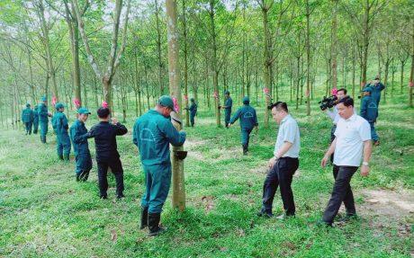 Cao su Hương Khê phấn đấu khai thác 600 tấn trong năm 2019. Trong ảnh: Không khí ra quân rộn ràng ngày đầu năm.