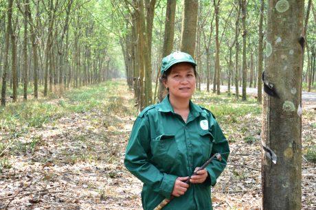 Chị Võ Thị Chinh yêu nghề công nhân khai thác mủ cao su