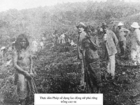 Chủ Tây sử dụng lao động nữ phá rừng trồng cao su