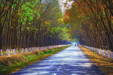 """Tác phẩm """"Con đường màu xanh"""" của tác giả Hồ Sỹ Long vào vòng chung khảo."""