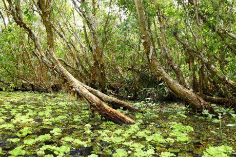 Dưới tán tràm là nước và các lớp thảm thực vật đa dạng, là nơi cư trú của nhiều loại động thực vật sinh sống.