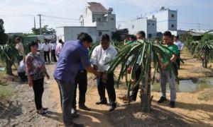 Nông dân tham quan mô hình trồng thanh long ruột đỏ hữu cơ của Tập đoàn Quế Lâm tại huyện Châu Thành, Long An.