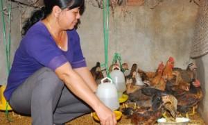 Ngoài những giờ cạo thêm trên lô chị Lan còn tranh thủ chăn nuôi thêm gia súc, gia cầm.