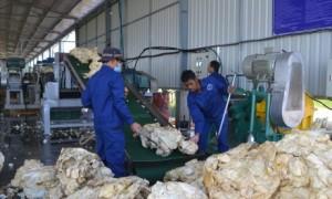 Sản xuất mủ tại Nhà máy chế biến Công ty CPCS Chư Sê – Kampong Thom. Ảnh: P.Long.