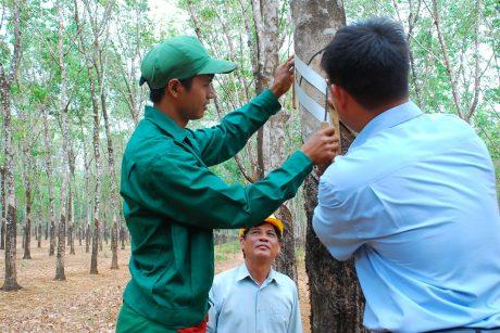 Cán bộ kỹ thuật Đội 14 hỗ trợ Siu Phôn thiết kế bảng cạo cho mùa khai thác mới.