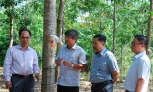 Phó TGĐ VRG Trần Công Kha kiểm tra công tác khai thác tại các đơn vị Tây Nguyên. Ảnh: Văn Vĩnh