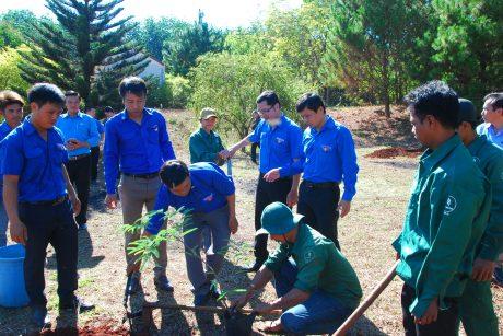Các đoàn viên tham gia trồng cây