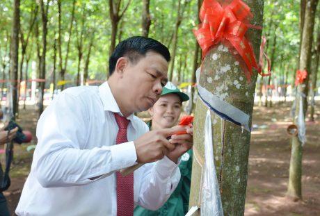 TGĐ Cao su Phú Riềng Lê Tiến Vương thao tác cạo mủ trong lễ ra quân