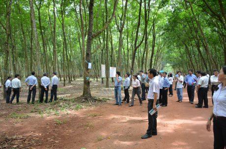 Các đại biểu tham quan mô hình trồng thử nghiệm giống mới năng suất cao của công ty cao su Tây Ninh