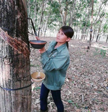 Nữ đảng viên Kiều Thị Tuyết với công việc hàng ngày trên vườn cây.