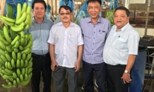 Ông Phạm Văn Thành – Thành viên HĐQT, Trưởng Ban KHĐT VRG (thứ 2 trái sang) và lãnh đạo công ty tham quan sản phẩm chuối sau thu hoạch.