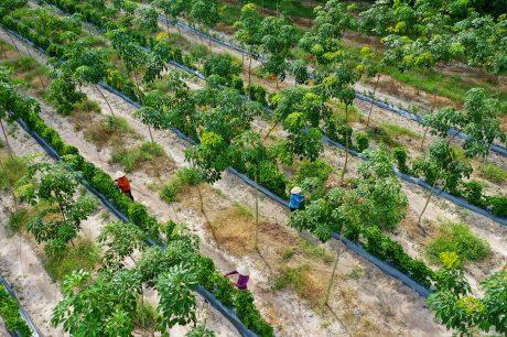 """Tác phẩm """"Thu hoạch trên vườn cây xen canh"""" của tác giả Bùi Việt Hưng đạt giải Nhất."""