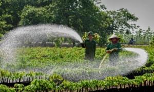 Hình ảnh đầy sức sống của vườn ươm hay xuất hiện trong thơ của NLĐ trong ngành. Ảnh: Trần Văn Sơn