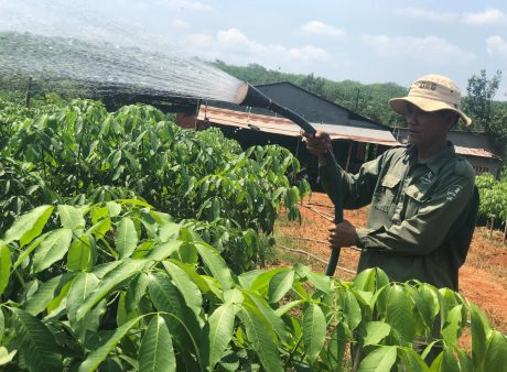 Anh Tạ Minh Quân với công việc chăm sóc vườn ươm tại NT Túc Trưng, TCT Cao su Đồng Nai.