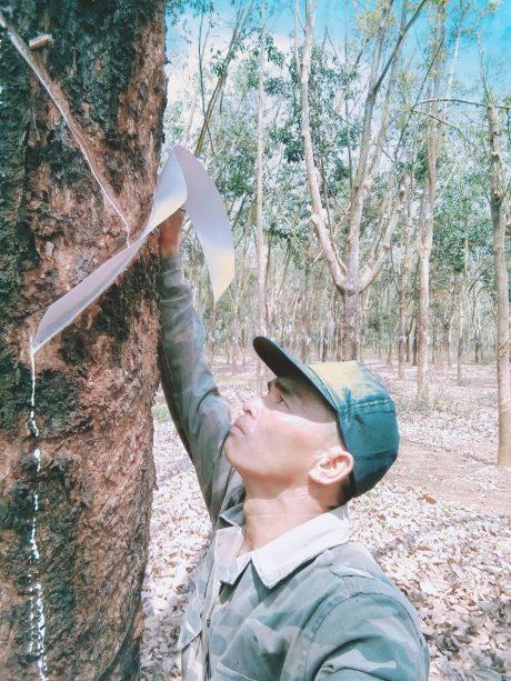 Anh Lê Văn Ngọ trên vườn cây khai thác